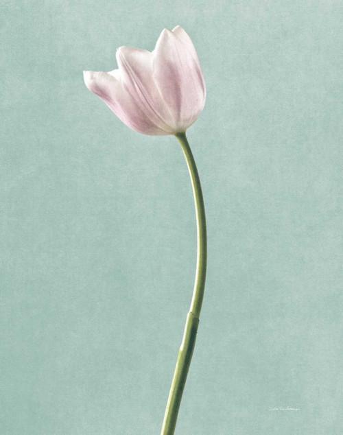 Light Tulips I Harbor Gray Poster Print by Debra Van Swearingen - Item # VARPDX32403