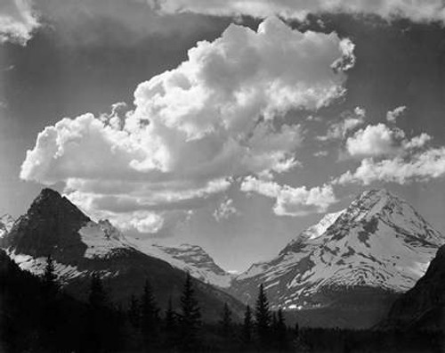 Trees in Glacier National Park, Montana - National Parks and Monuments, 1941 Poster Print by Ansel Adams - Item # VARPDX460731