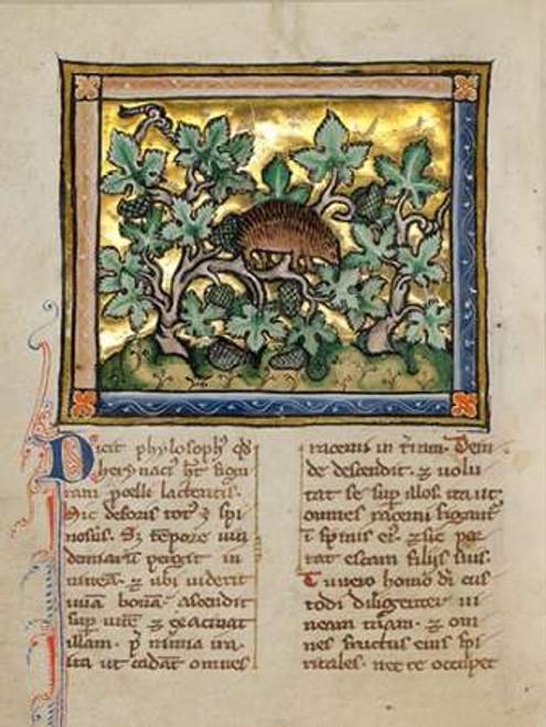 A Hedgehog Poster Print by Franco-Flemish 13th Century - Item # VARPDX454751