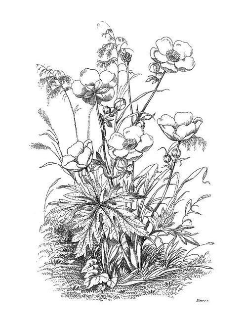 Botanical Black and Poster Print by Kelly Donovan - Item # VARPDX18994