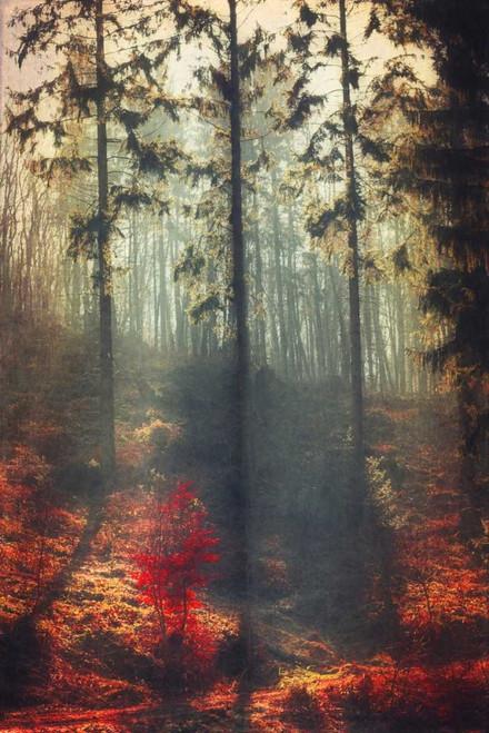 Weight of Light Poster Print by Dirk Wuestenhagen - Item # VARPDXW902D