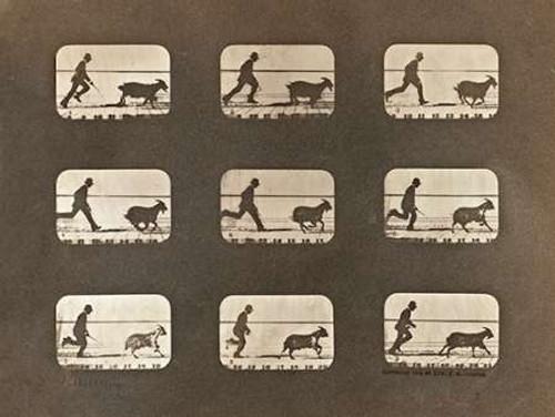 Motion Study: Man Chasing A Goat Poster Print by Eadweard Muybridge - Item # VARPDX474189