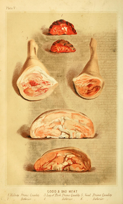 Cassell's Dictionary of Cookery 1892 Good & Bad Meat 2 Poster Print - Item # VARPPHPD51903