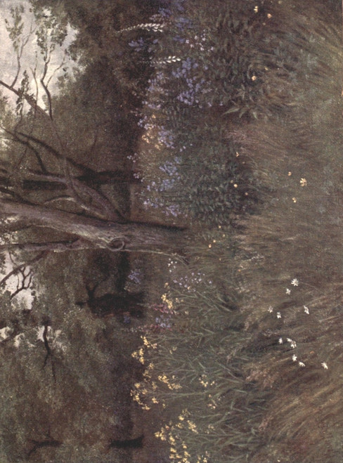 Kew Gardens 1908  Wild Flowers in the Beech Woods Poster Print by  Thomas Mower Martin - Item # VARPPHPDP85243