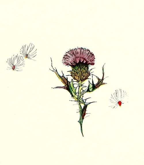Wild Flower Children c.1918 Thistle Poster Print by  Janet Laura Scott - Item # VARPPHPDA63444