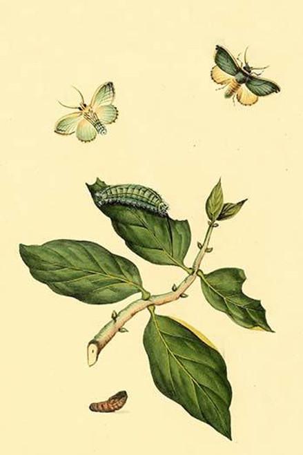 Surinam Butterflies, Moths & Caterpillars Poster Print by Jan Sepp - Item # VARBLL0587309628