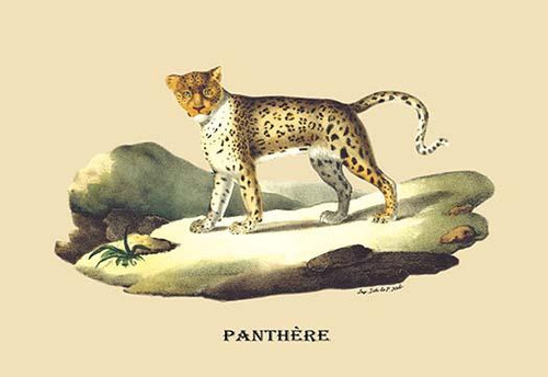 The agile and stealthy panther. Poster Print by E. F. Noel - Item # VARBLL0587089156