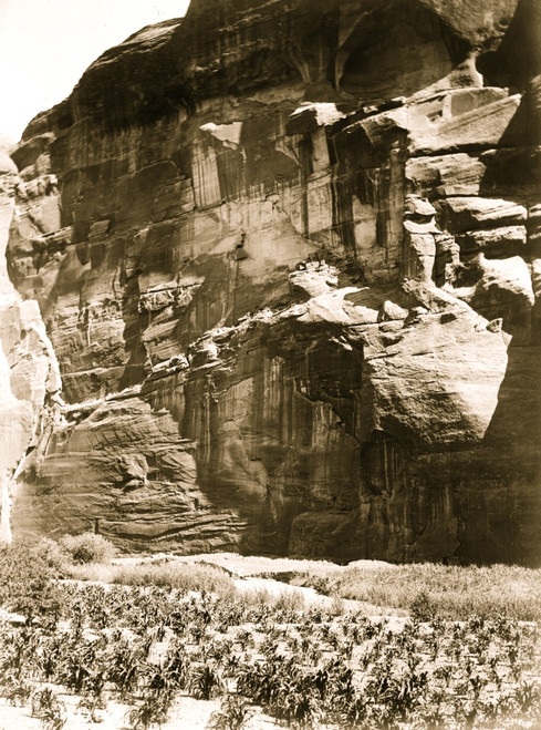 Navajo Indian cornfield, cliffs in background. Poster Print - Item # VARBLL058747448L