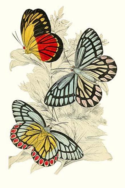 European Butterflies & Moths Poster Print by James  Duncan - Item # VARBLL0587322837