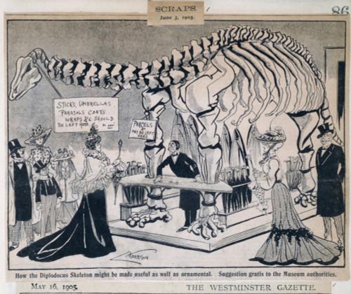 Diplodocus Carnegiei Poster Print By Mary Evans / Natural History Museum - Item # VARMEL10714600