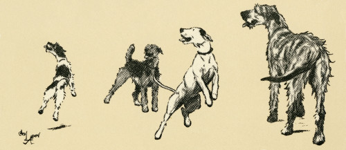 Illustration By Cecil Aldin  Dogs Eager For A Walk Poster Print By Mary Evans Picture Library - Item # VARMEL10980241