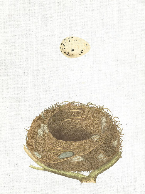 Spring Nest III Poster Print by Wild Apple Portfolio - Item # VARPDX43808