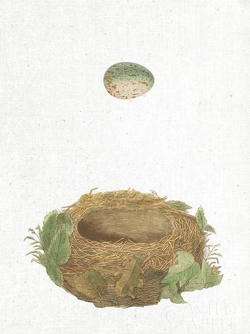 Spring Nest IV Poster Print by Wild Apple Portfolio - Item # VARPDX43809