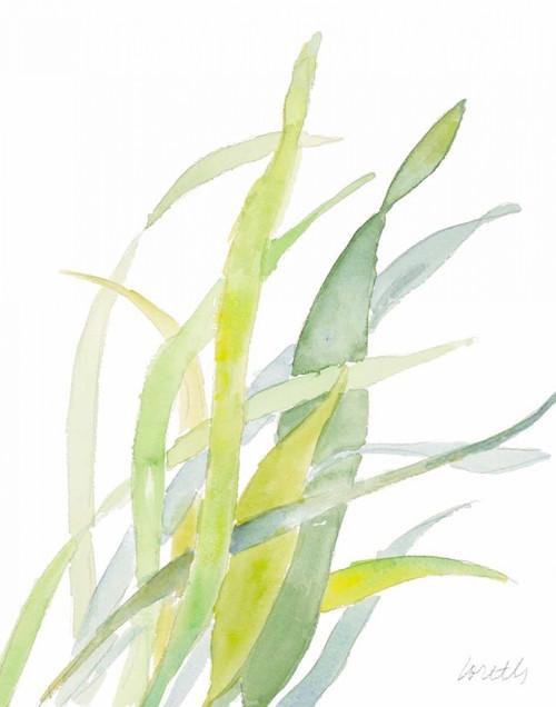 Seagrasses and Eelgrasses II Poster Print by Lanie Loreth - Item # VARPDX12186