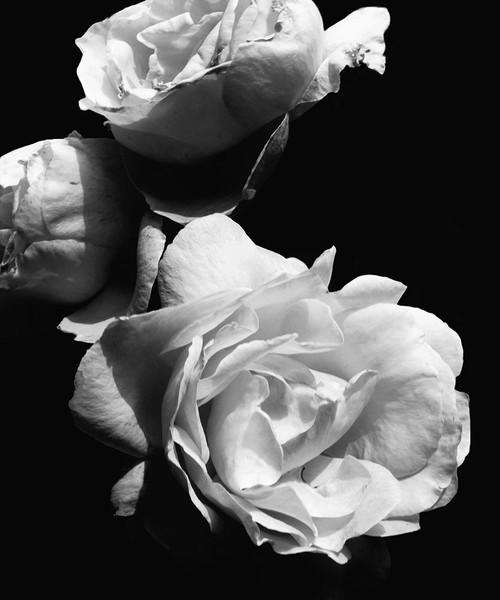 Dramatic Love Blooms II Poster Print by Emily Navas - Item # VARPDX11964AA