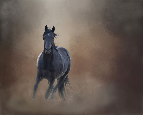 Knighthawk - S Steens Wild Stallion Poster Print by Larry McFerrin - Item # VARPDXLF1015