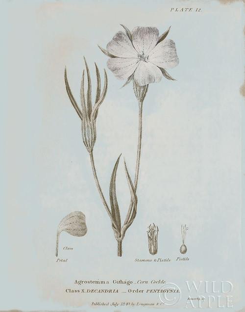 Conversations on Botany III Blue Poster Print by Wild Apple Portfolio - Item # VARPDX37198
