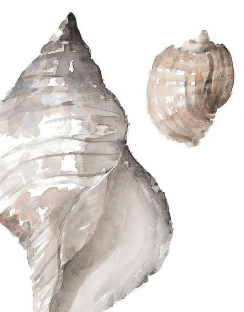 Tonal Shell I Poster Print by Lanie Loreth - Item # VARPDX12945