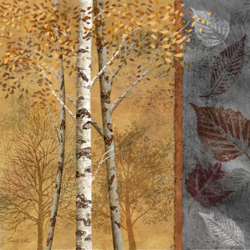 Birch Trees in Autumn II Poster Print by Conrad Knutsen - Item # VARPDX12303