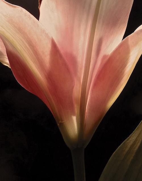 Blooming Peach Floral Poster Print by Monika Burkhart - Item # VARPDXPSBHT436