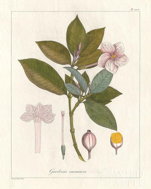 Botanical Gardenia v2 Poster Print by Wild Apple Portfolio - Item # VARPDX45385