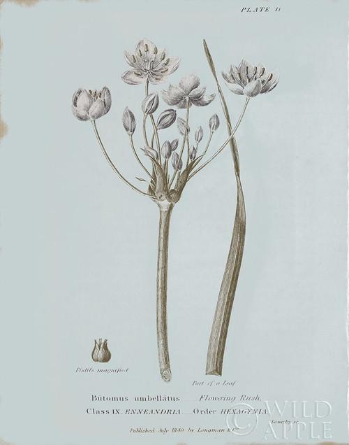 Conversations on Botany II Blue Poster Print by Wild Apple Portfolio - Item # VARPDX37197