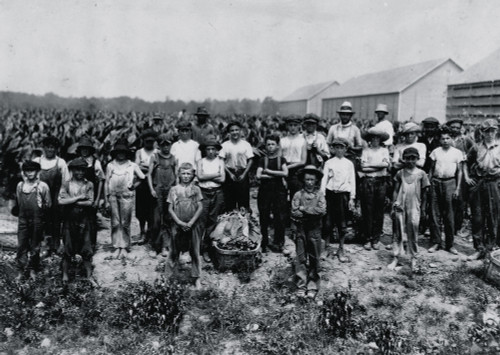 Group of field-workers at Huttings Tobacco Farm. One of 9 years, two of 11 years, 8 of 12 years, 5 of 13 years, 3 of 14 years, 1 of 15. Four of 11 and 12 had gone home and were not counted. Most of these get $1.50 a day. Poster Print - Item # VARBLL0