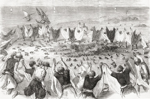 Quail Hunting On The Coast Of Syria In The Late 19th Century. From L'univers Illustre, Published 1866. Poster Print by Ken Welsh / Design Pics - Item # VARDPI12280352