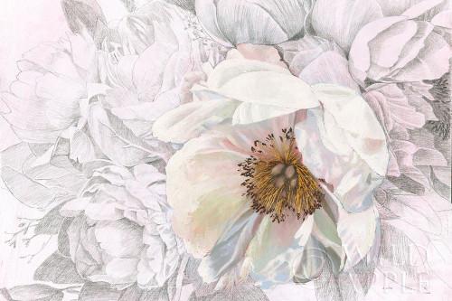 Blooming Sketch Poster Print by James Wiens - Item # VARPDX50318