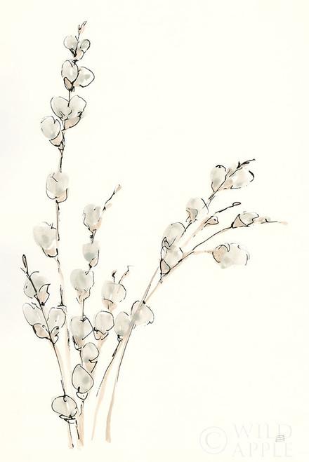 Pussy Willows V Poster Print by Chris Paschke - Item # VARPDX55083