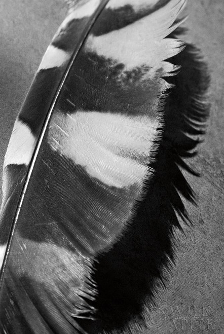 Feather Shadow I Poster Print by Debra Van Swearingen - Item # VARPDX55154