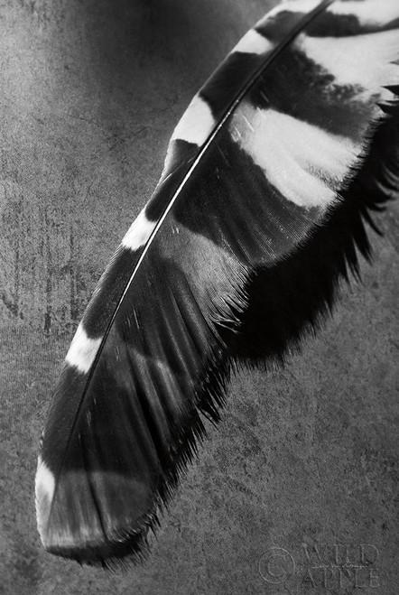 Feather Shadow II Poster Print by Debra Van Swearingen - Item # VARPDX55155