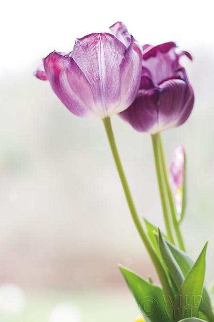 Tulip Time II Poster Print by Aledanda Aledanda - Item # VARPDX55237