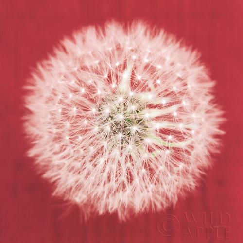 Dandelion on Red I Poster Print by Aledanda Aledanda - Item # VARPDX55244