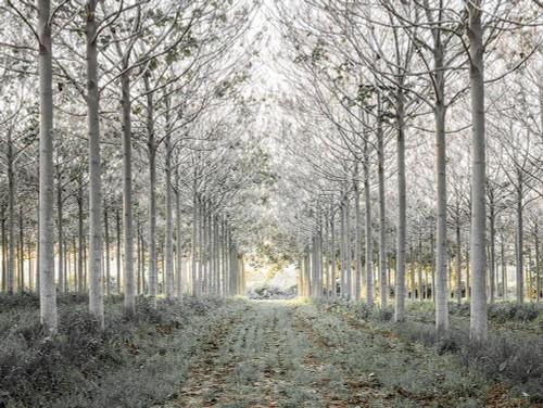Pathway through trees in forest, FTBR-1833 Poster Print by Assaf Frank - Item # VARPDXAF20151226069C03