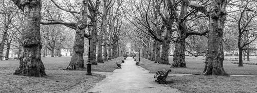Avenue of trees, Green Park, London, FTBR-1839 Poster Print by Assaf Frank - Item # VARPDXAF20160415124C06