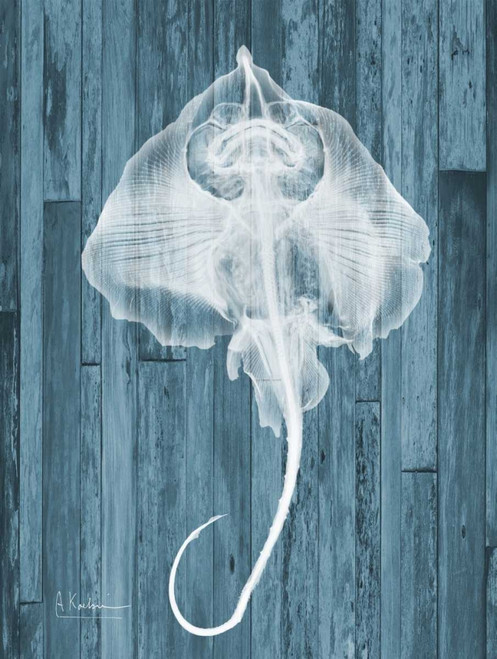Skate Wood L86 Poster Print by Albert Koetsier - Item # VARPDXAK5RC106C