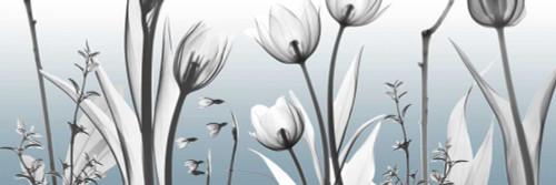 Heavenly Botanicals Poster Print by Albert Koetsier - Item # VARPDXAK8PL012A