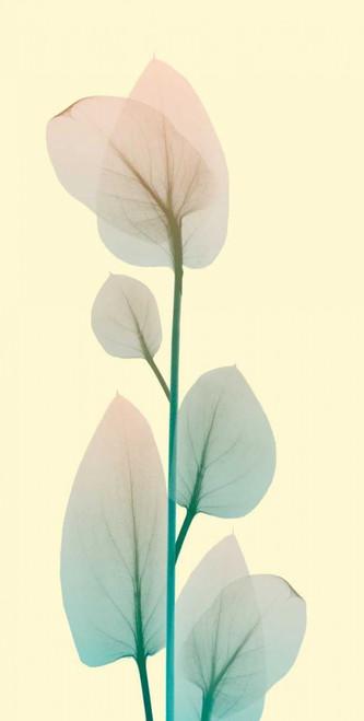 Blissful Bloom 2 Poster Print by Albert Koetsier - Item # VARPDXAK8PL016B