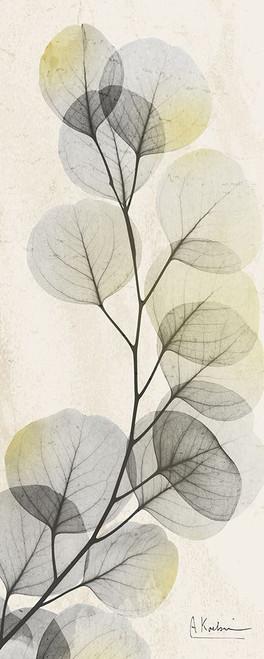 Eucalyptus Sunshine Poster Print by Albert Koetsier - Item # VARPDXAK8PL017A