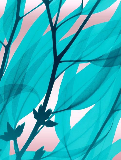 Eucalyptus Cotton Candy Poster Print by Albert Koetsier - Item # VARPDXAK8RC069A