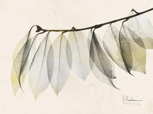Sunkissed Camelia Leaf Poster Print by Albert Koetsier - Item # VARPDXAK8RC190A