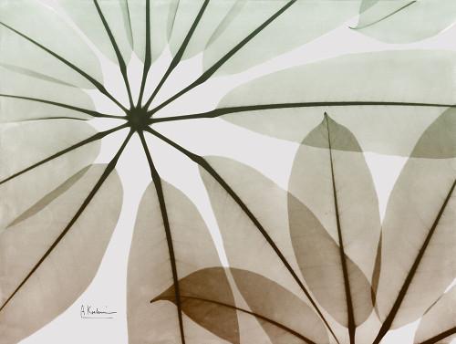 Earthy Brassai Poster Print by Albert Koetsier - Item # VARPDXAK8RC323B