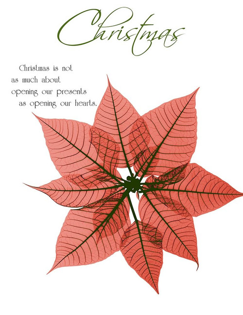 Seasonal Poinsettia 1 Poster Print by Albert Koetsier - Item # VARPDXAK8RC576E