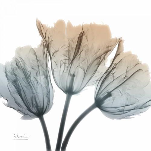 Earthy Tulips Poster Print by Albert Koetsier - Item # VARPDXAK8SQ018B