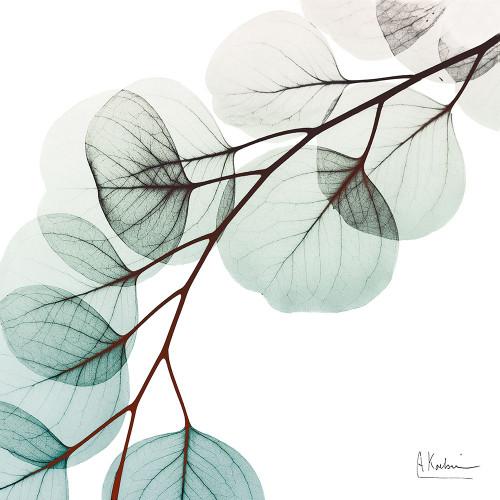 Extravagant Eucalyptus 1 Poster Print by Albert Koetsier - Item # VARPDXAK8SQ215A