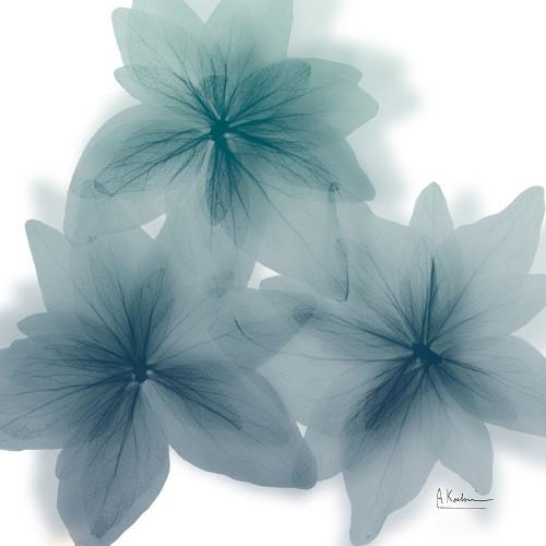 Nebulous Flora 1 Poster Print by Albert Koetsier - Item # VARPDXAK8SQ216A