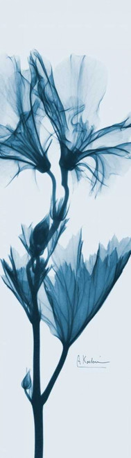 Geranium in Blue Poster Print by Albert Koetsier - Item # VARPDXAKPL074A