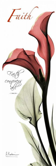 Calla Lily in Red - Faith Poster Print by Albert Koetsier - Item # VARPDXAKPL082B