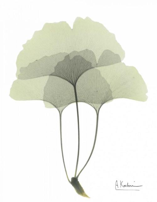 Gingko in Pale Green 3 Poster Print by Albert Koetsier - Item # VARPDXAKRC095